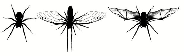 aranhas copy copy